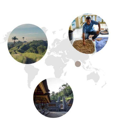 Ursprungsland von Muskatnuss auf der Weltkarte: Indonesien